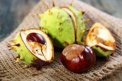 Chestnuts. Stock Image