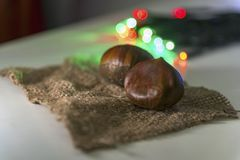 Chestnuts on a piece of hessian fabric with christmas lights, close up stock image