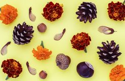Chestnuts pine cones blackberries hazelnuts and maple seeds on an yellow background royalty free stock photo