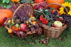 Chestnuts, pumpkins, flowers. And colorful autumn leaves Royalty Free Stock Photos