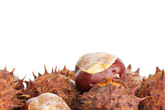 Chestnuts with room for text Stock Image