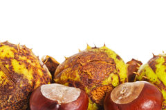 Chestnuts with room for text Stock Photo
