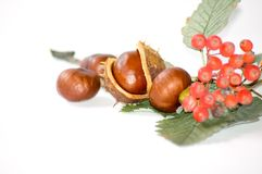 Chestnuts and rowan Stock Image