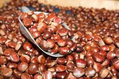 Chestnuts seasonal fruit farming Emilia Romagna Italy Stock Photography