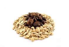 Chestnuts and seeds. A bundle of chestnuts and seeds Royalty Free Stock Photo