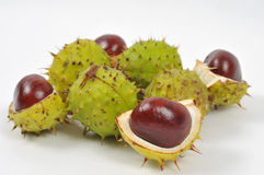 Chestnuts series, fall is coming. Image of a chestnuts and conkers on white background Stock Image