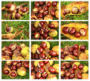 Chestnuts set Stock Image