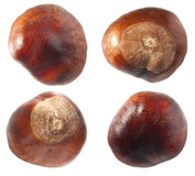 Chestnuts set Stock Image