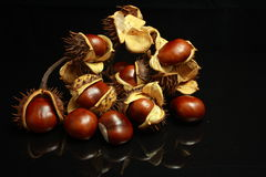 Chestnuts set of eight with burrs Stock Images