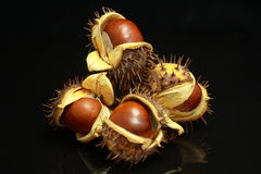 Chestnuts set of four Stock Images