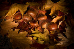 Chestnuts and shadows Royalty Free Stock Photography