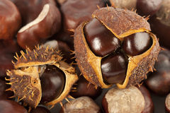 Chestnuts in shell Royalty Free Stock Images