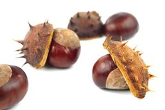 Chestnuts with shell on white background Stock Photos