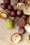 Chestnuts and Shells. Stock Image