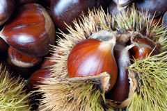 Chestnuts of Sicily Stock Image