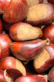 Chestnuts of Sicily Royalty Free Stock Images