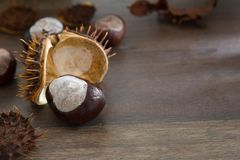 Chestnuts and spiked shells. Closeup of wild chestnuts and spiked shells on a wooden table Stock Image