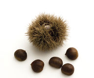 Chestnuts and spiky cupule on white Stock Photos
