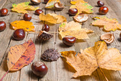 Chestnuts on a table. Chestnuts on a brown wooden table with some leaves stock photo