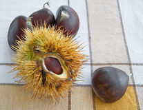Chestnuts on tablecloth. Royalty Free Stock Photos