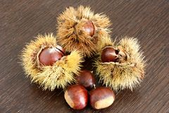 Chestnuts and their chestnut curls. Some fresh chestnuts and their chestnut curls on a wooden table Stock Photo