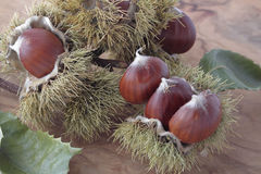 Chestnuts with their outward prickly rind Royalty Free Stock Images