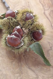 Chestnuts with their outward prickly rind stock photo