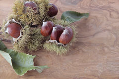 Chestnuts with their outward prickly rind royalty free stock photography