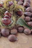 Chestnuts with their outward prickly rind stock photography