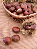 Chestnuts in their shells Royalty Free Stock Photo