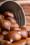 Chestnuts in a tin bucket Stock Photography
