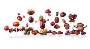 Chestnuts Toys Stock Photography