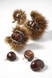 Chestnuts and Urchins Royalty Free Stock Photo