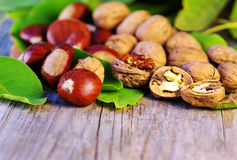 Chestnuts and walnuts Stock Images