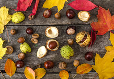 Chestnuts, walnuts, autumn mood, flat lay Stock Image