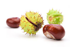Chestnuts on a white background Royalty Free Stock Images