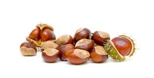Chestnuts on white background stock photo