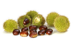 Chestnuts on the white background Stock Images