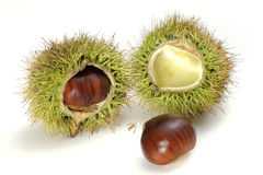 Chestnuts on the white background Royalty Free Stock Images
