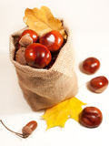 Chestnuts on a white background Stock Image