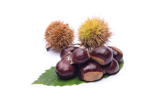 Chestnuts on white background. Chestnuts and leaf on white background Stock Image