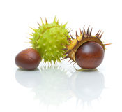 Chestnuts on white background with reflection Stock Photography
