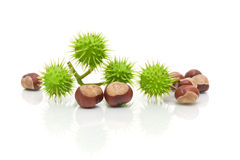 Chestnuts on white background with reflection Royalty Free Stock Photos