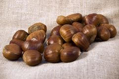 Chestnuts on white cackcloth Royalty Free Stock Photos