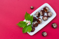 Chestnuts on white plate Royalty Free Stock Image
