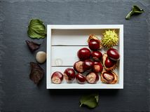 Chestnuts in White Tray on Slate. Chestnuts in White Tray on Grey Slate Stock Photo