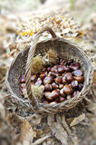 Chestnuts In a wicker Basket Royalty Free Stock Images