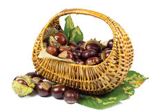Chestnuts in Wicker Basket on Green Leaves Isolated on White Stock Images