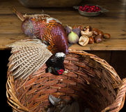 Chestnuts and wild pheasant. Wild pheasant and fruit in an old master hunting still life Royalty Free Stock Image