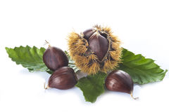 Chestnuts With Leaves And Burrs Isolated On A White Background Stock Photo